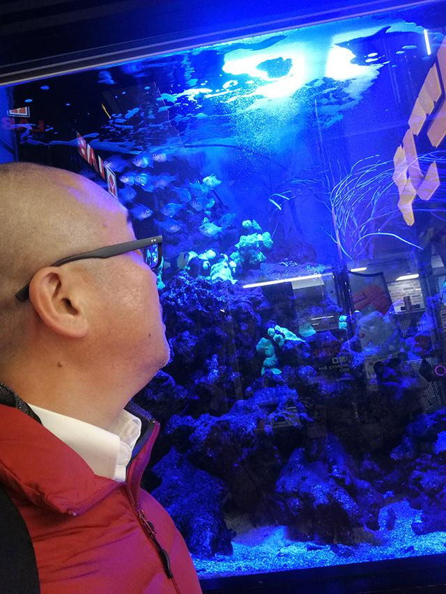 アップリンク渋谷への道中、メガドン・キホーテ渋谷本店店頭の熱帯魚を堪能 | 映画「セブンガール」
