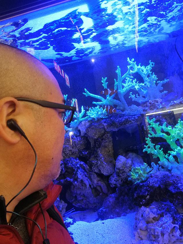 アップリンク渋谷への道中、メガドン・キホーテ渋谷本店店頭の熱帯魚を堪能   映画「セブンガール」