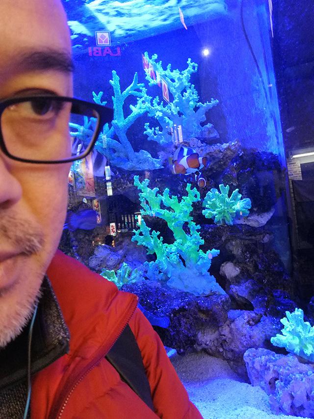 アップリンク渋谷への道中、メガドン・キホーテ渋谷本店店頭の熱帯魚を堪能